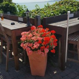 Belle Vue Tavern Pegwell Bay in Bloom 8
