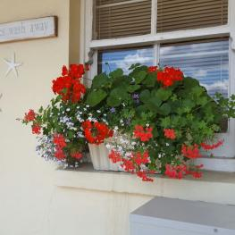Belle Vue Tavern Pegwell Bay in Bloom 9